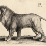 800px-Wenceslas_Hollar_-_A_lion_standing,_after_Dürer_(State_1)