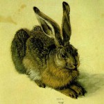 A Young Hare by Albrecht Durer