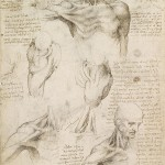 anatomical-drawing-of-shoulder-and-neck-leonardo-da-vinci