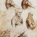 da-vinci-anatomical-drawings-science-source