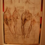 da_vinci__s_anatomical_drawings_iii_by_roony_of_the_wood-d5n8fd7