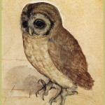 the-little-owl-1508-painting-by-albrecht-durer-the-little-owl-1508-fine-art-prints-and-posters-for-sale-1383933368_org