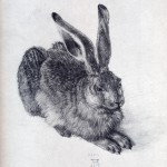 young_hare-large