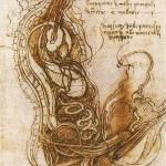 ダヴィンチ解剖図