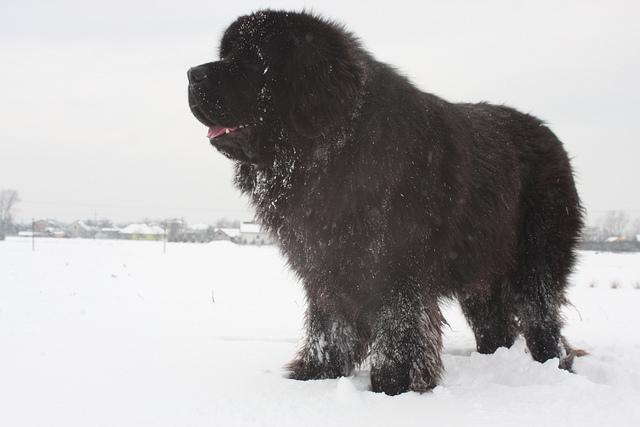 カナダ犬   世界の犬種サイト